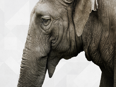 Wwf portraitnav elephants bgcropped