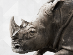 Wwf portraitnav rhinos bgcropped