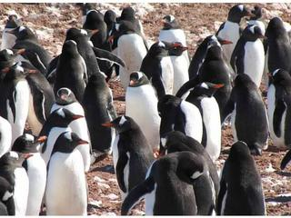 penguins colony travel blog