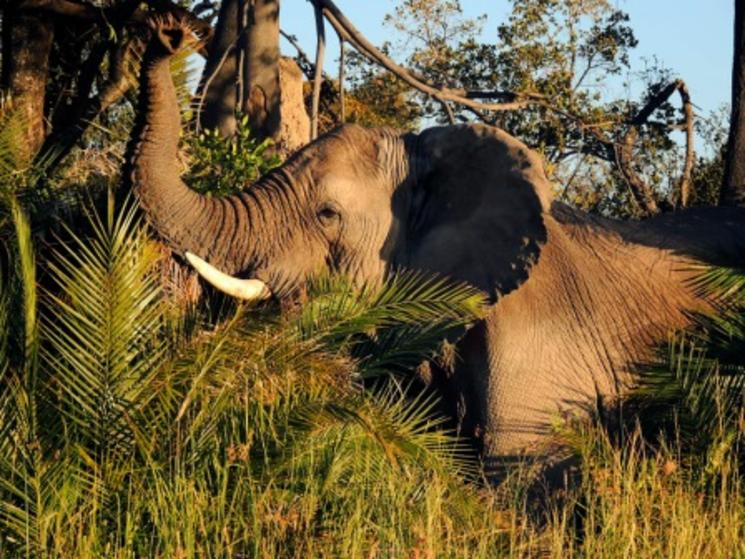 ten wild facts about the big five blog posts wwf. Black Bedroom Furniture Sets. Home Design Ideas