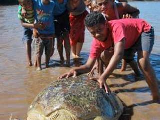 Josua Muakula and a marine turtle