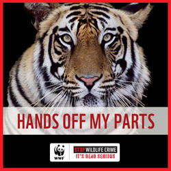 Hands Off My Parts (Tiger)