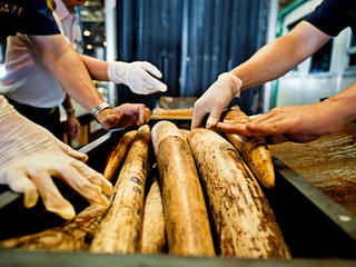 Thai officials seize shipment of illegal African elephant tusks.