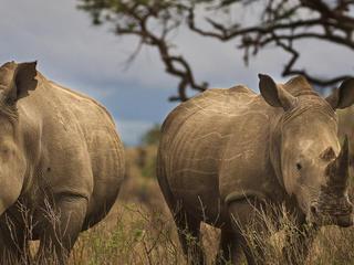rhinos_hero_2_298961