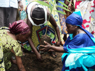 women in DRC - reforestation