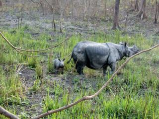 Rhino-17 and calf Jamir-Ali-WWF-India (1)