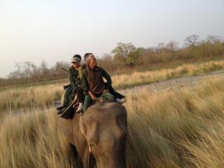 tracking tigers on elephant