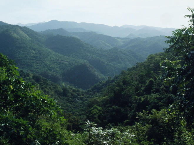 Typical montane moist forest with epiphytes surrounding the Turquino National Park, which is currently closed to tourists. The area is part of the Greater Antillean Moist Forests ecoregion. Sierra Maestra Range, Cuba