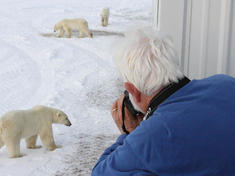 Photographing polar bears from the tundra lodge