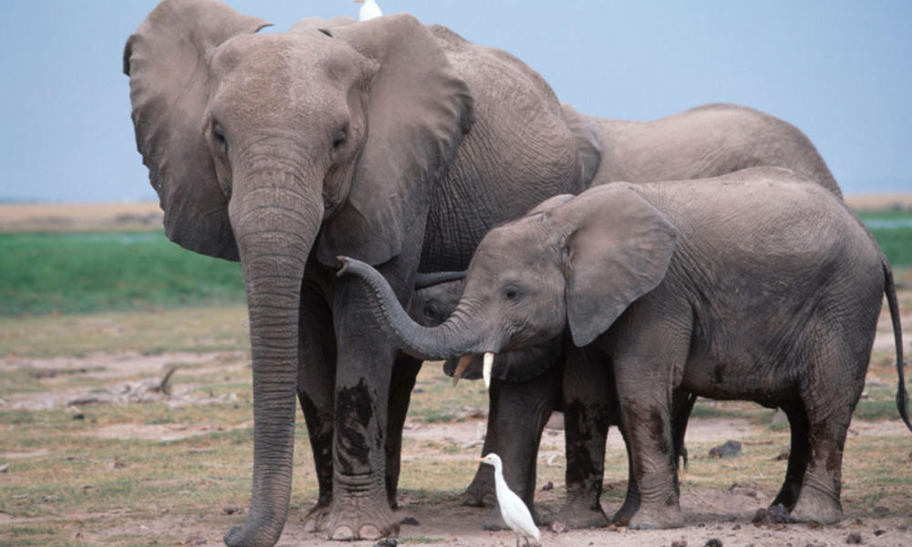 7 elephant facts you should know   Stories   WWF