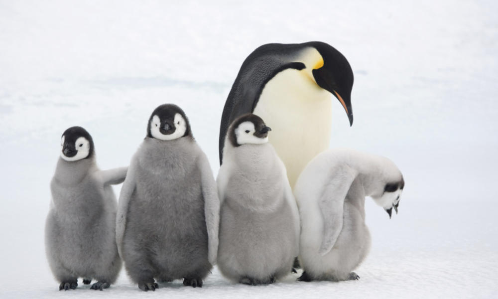 Perfect 5 remarkable animal moms | Stories | WWF KQ22