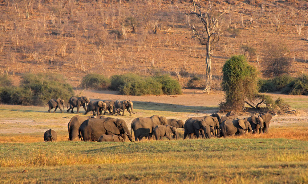 KAZA elephants