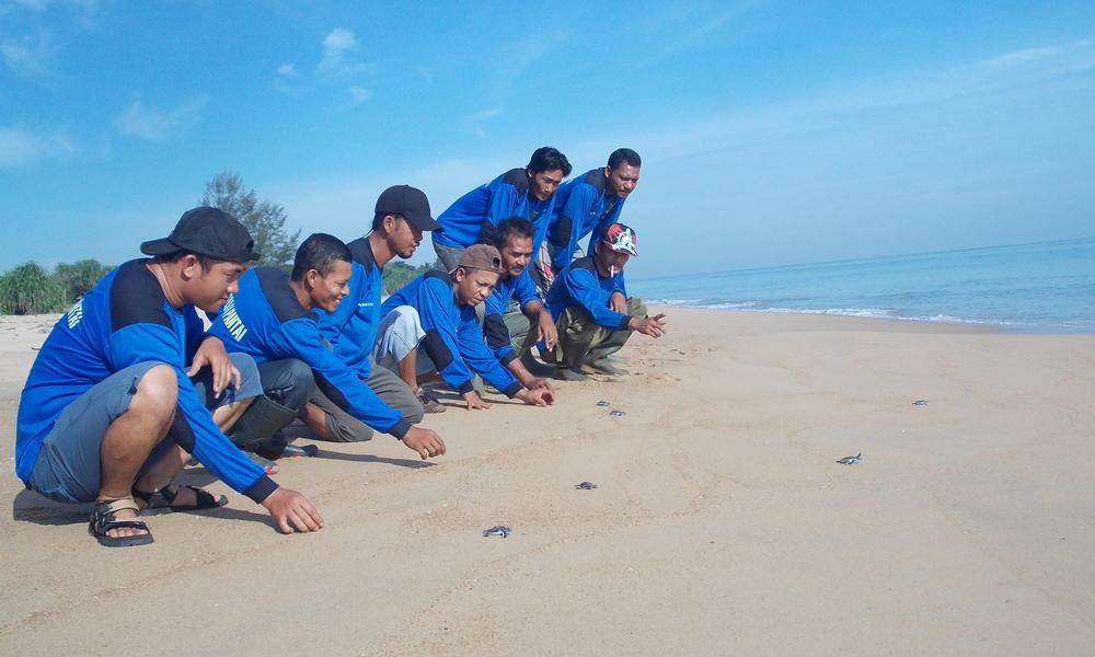 Turtle release in borneo