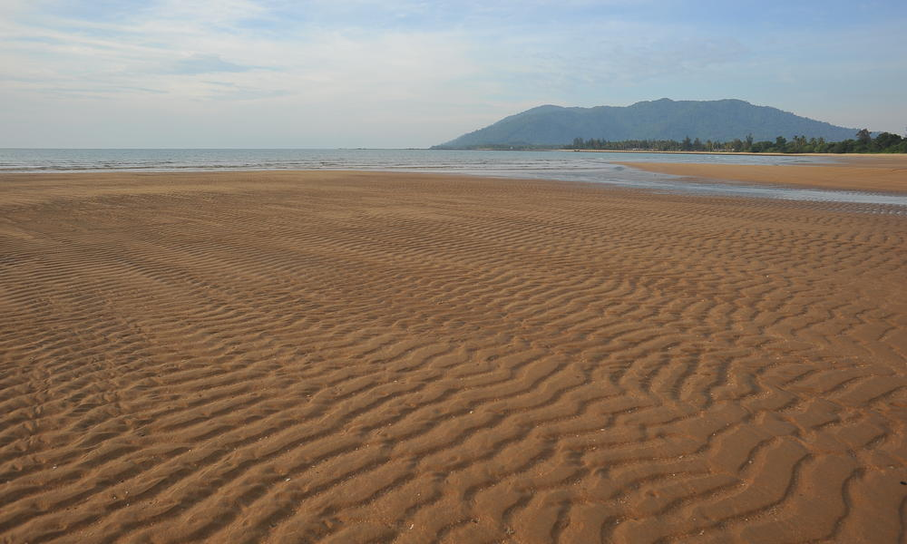 nesting beach