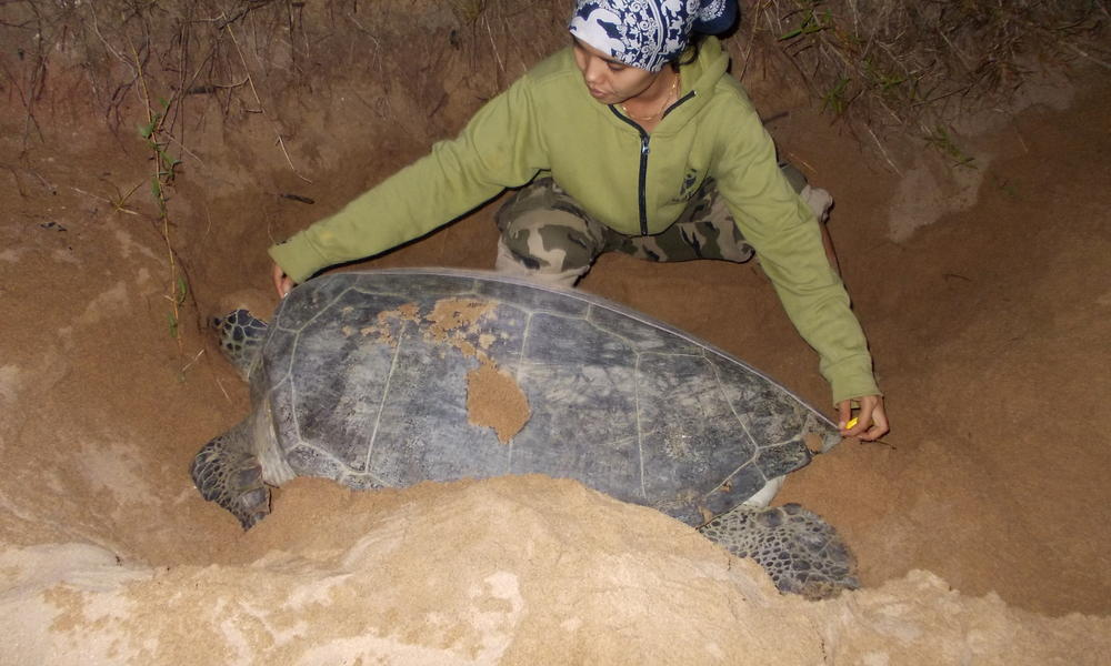 turtle monitoring