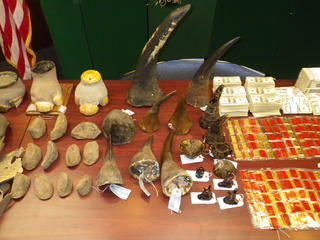 Items, including rhino horn, confiscated from wildlife criminals