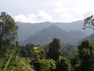 On Balance HEADER IMAGE Borneo landscape