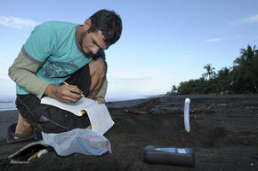 Olive Ridley Turtle Research