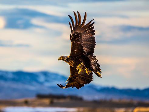 eagle bozeman