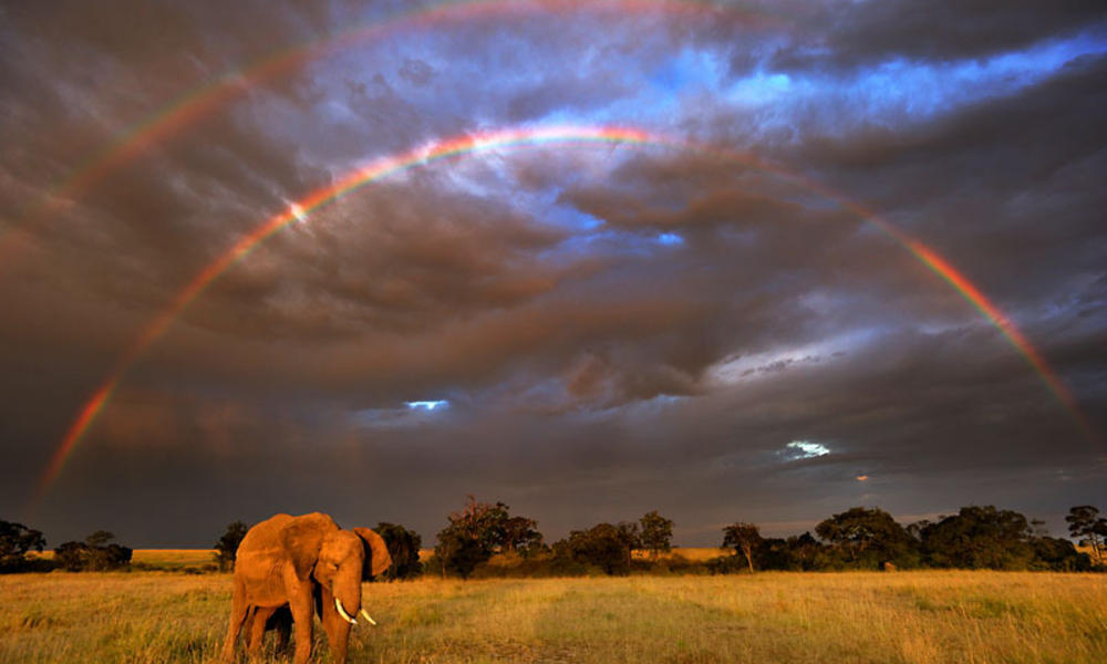 Elephant under a rainbow