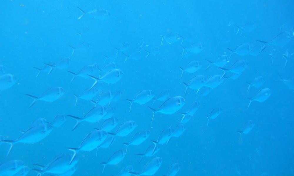 MattGoddard_NHA_Galapagos.jpg