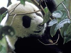 Yangtze specie image %28c%29 jenny jonak wwf us