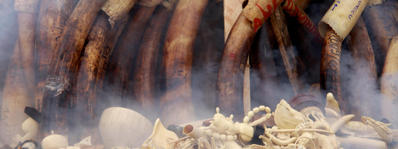 Elephant tusks and ivory products and trinkets go up in flames during the burning of Gabon's illegal ivory