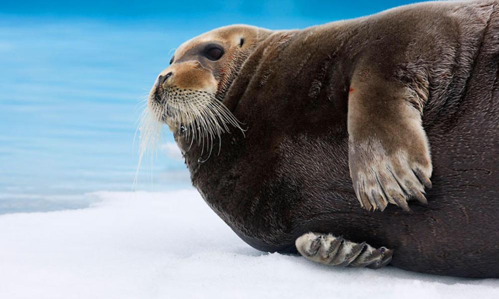 Seals_Hero_image_259279.jpg