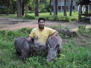 ranger with rhino calves