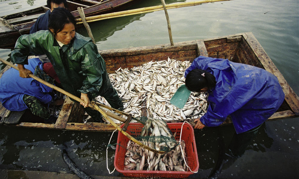 Fishing on the Yangtze