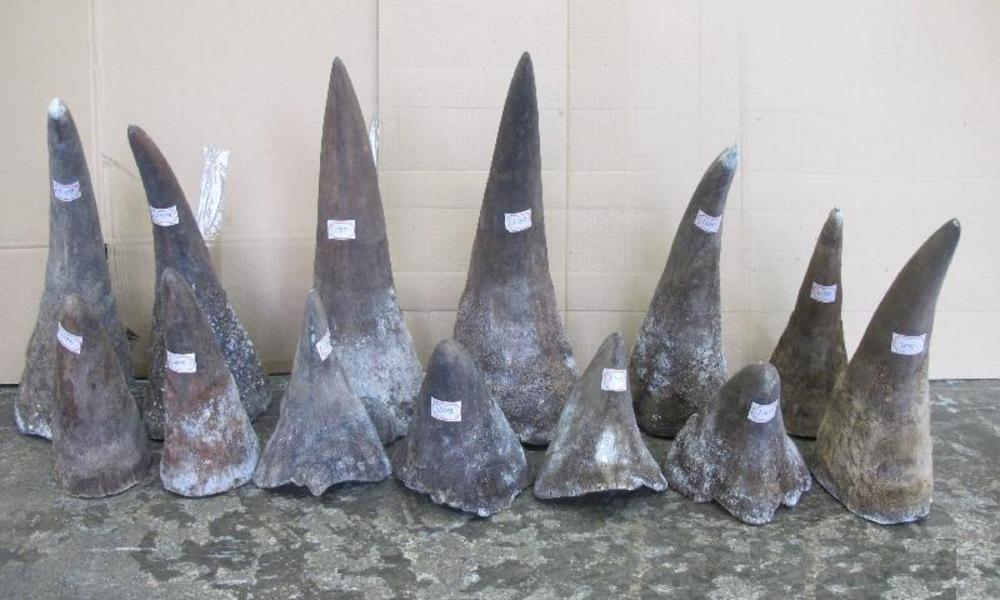 rhino horns seized by Hong Kong customs officials