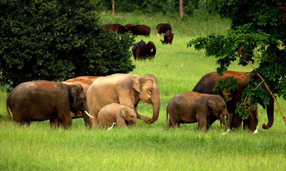 elephants in Kui Buri national park thailand