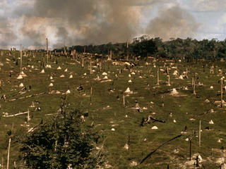 Cattle Ranching and Forest Burning in the Amazon
