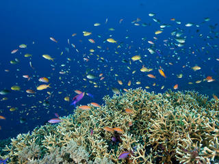 fish in tubbataha reef