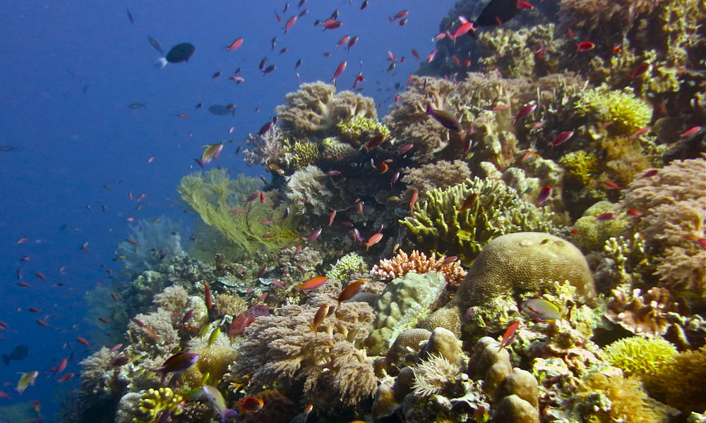 tubbataha reef wall