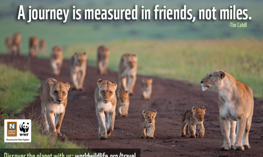 Viral Ad Friends Lionness