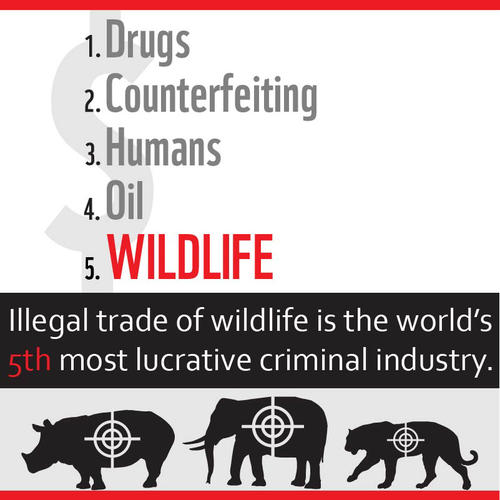 Illegal trade of wildlife is the world's 5th most lucrative criminal industry