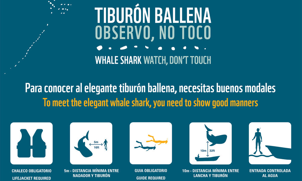 Poster - Whale Shark Campaign in Mexico