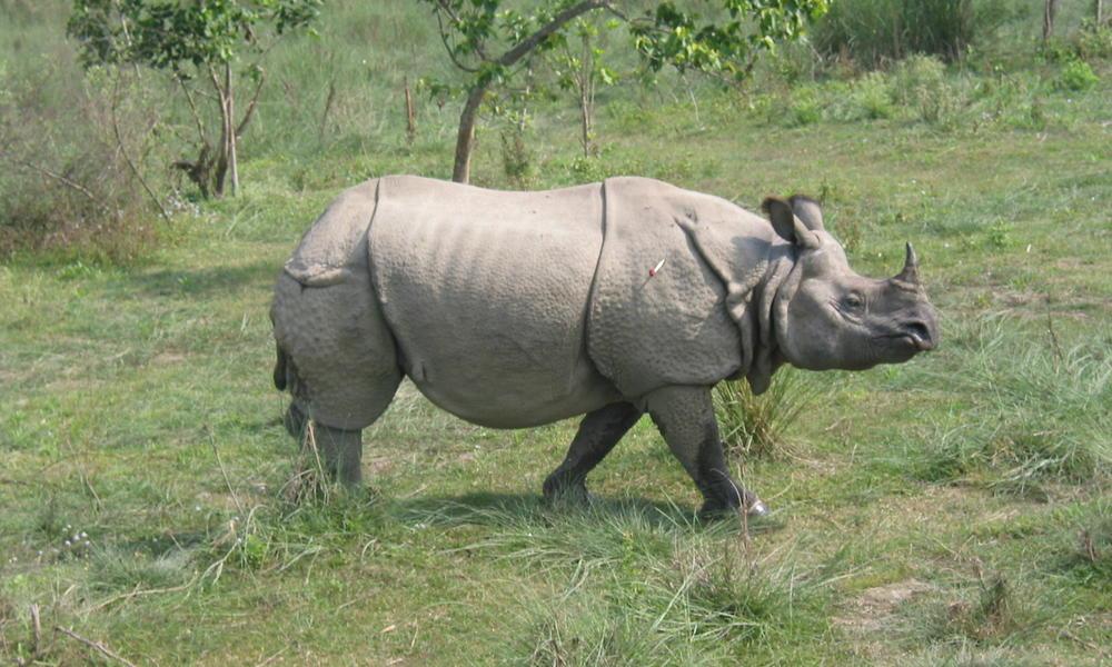 Chasing_Rhinos04_9.17.13_Page