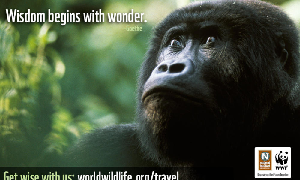 Travel Wallpaper - 800x527 Gorilla Wisdom