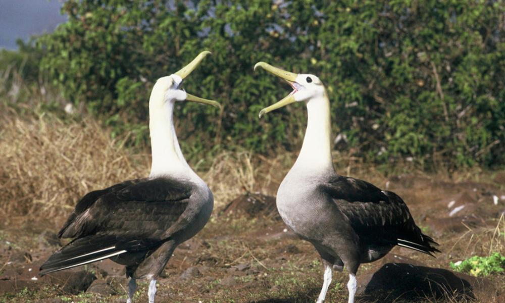 Galapagos Species