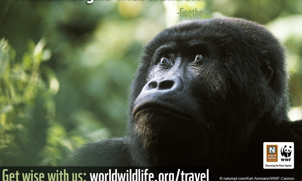 Travel Wallpaper - 1280x1024 Gorilla Wisdom