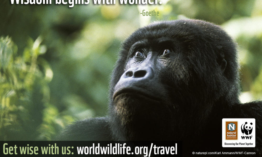 Travel Wallpaper - 1024x768 Gorilla Wisdom