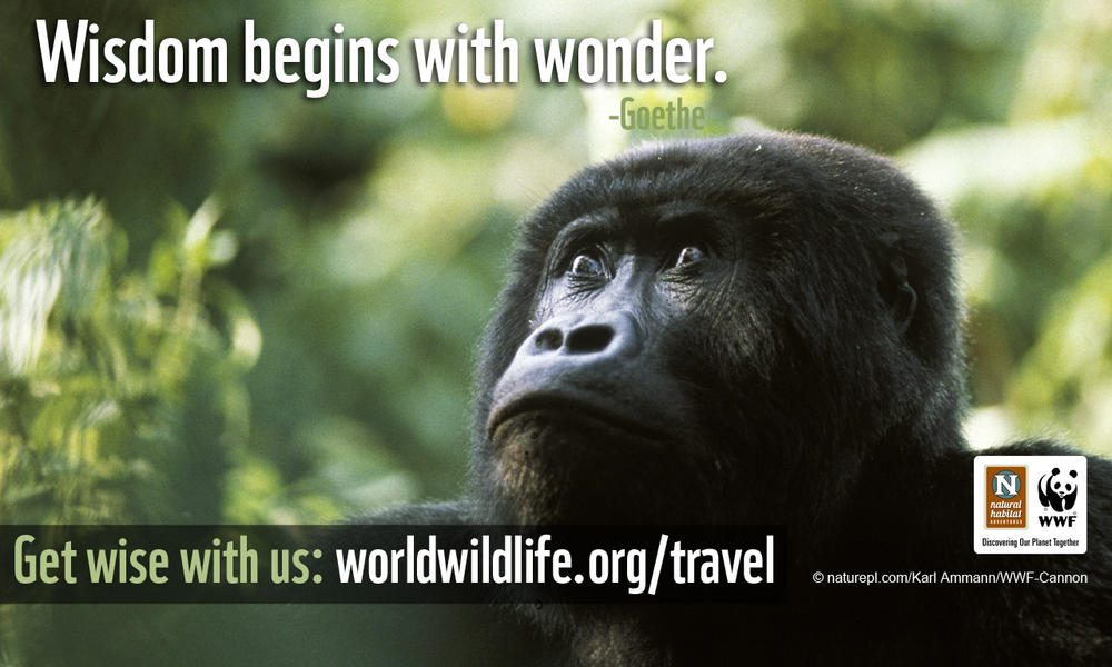 Travel Wallpaper - 1280x800 Gorilla Wisdom