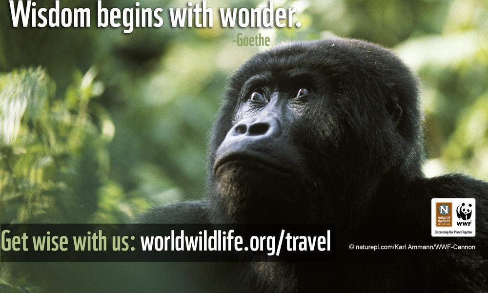 Travel Wallpaper - 1440x900 Gorilla Wisdom
