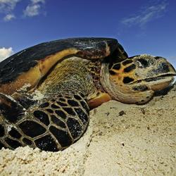 Lg marine turtles hero image %28c%29 martin harvey wwf canon