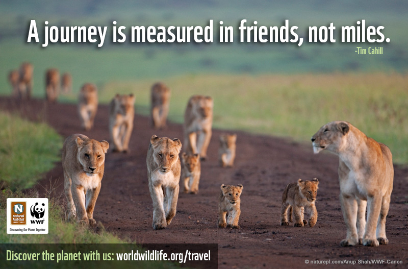 A journey is measured in friends, not miles.