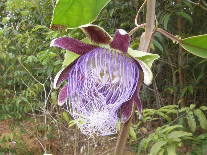 new amazon plant