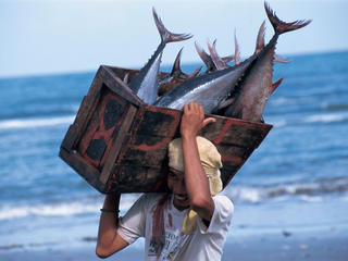 man carrying tuna