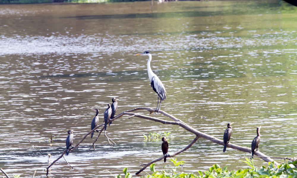 great blue and birds